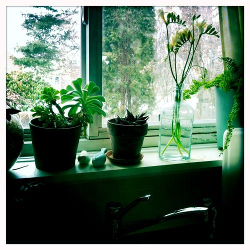 Plantsinwindows